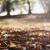 晩秋の候を使う時期は10月から?意味や使い方を例文とともに!