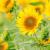盛夏の候の意味と使う時期とは?例文で具体的に解説!