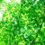 新緑の候の意味と時期は?具体的な例文で使い方も解り易く解説!